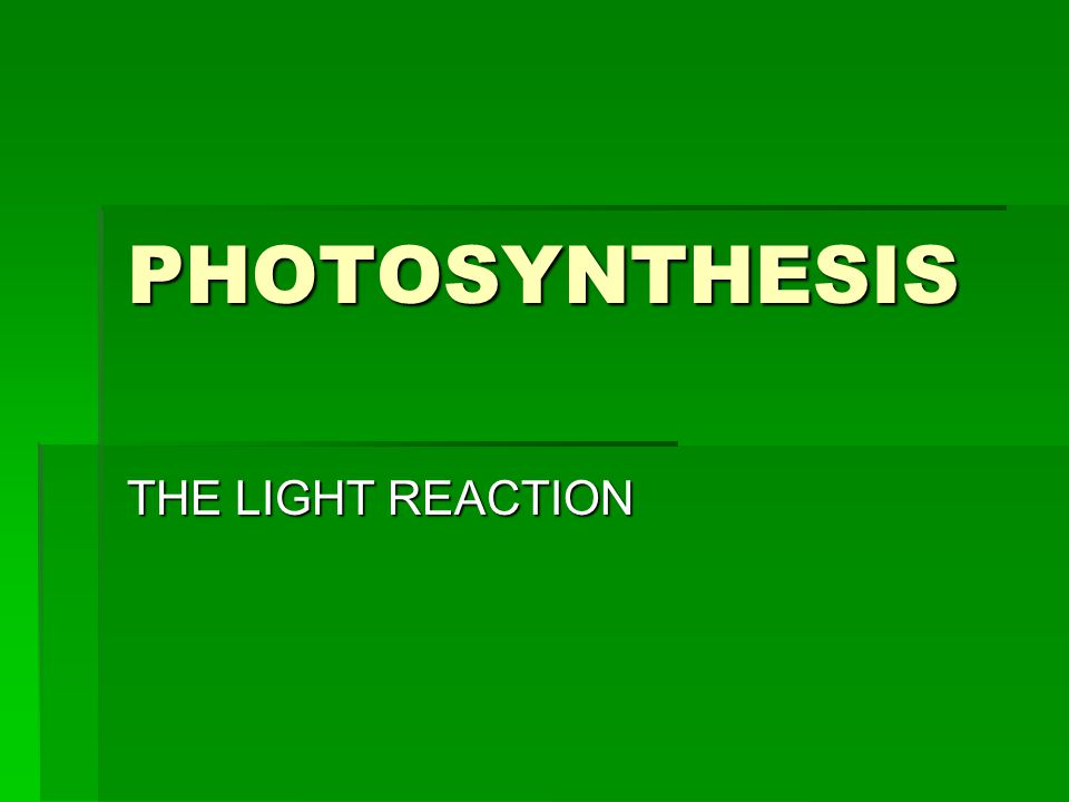 PHOTOSYNTHESIS THE LIGHT REACTION