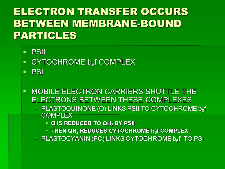 ELECTRON TRANSFER OCCURS BETWEEN MEMBRANE-BOUND PARTICLES  PSII  CYTOCHROME b 6 f COMPLEX  PSI  MOBILE ELECTRON CARRIERS SHUTTLE THE ELECTRONS BET