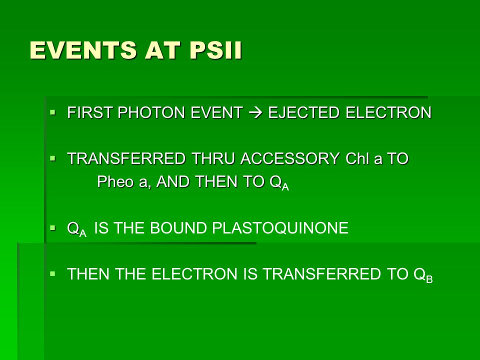 EVENTS AT PSII  FIRST PHOTON EVENT  EJECTED ELECTRON  TRANSFERRED THRU ACCESSORY Chl a TO Pheo a, AND THEN TO Q Pheo a, AND THEN TO Q A  Q  Q A I