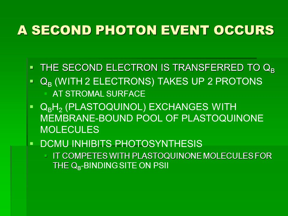 A SECOND PHOTON EVENT OCCURS  THE SECOND ELECTRON IS TRANSFERRED TO Q B  Q  Q B (WITH 2 ELECTRONS) TAKES UP 2 PROTONS   AT STROMAL SURFACE   Q