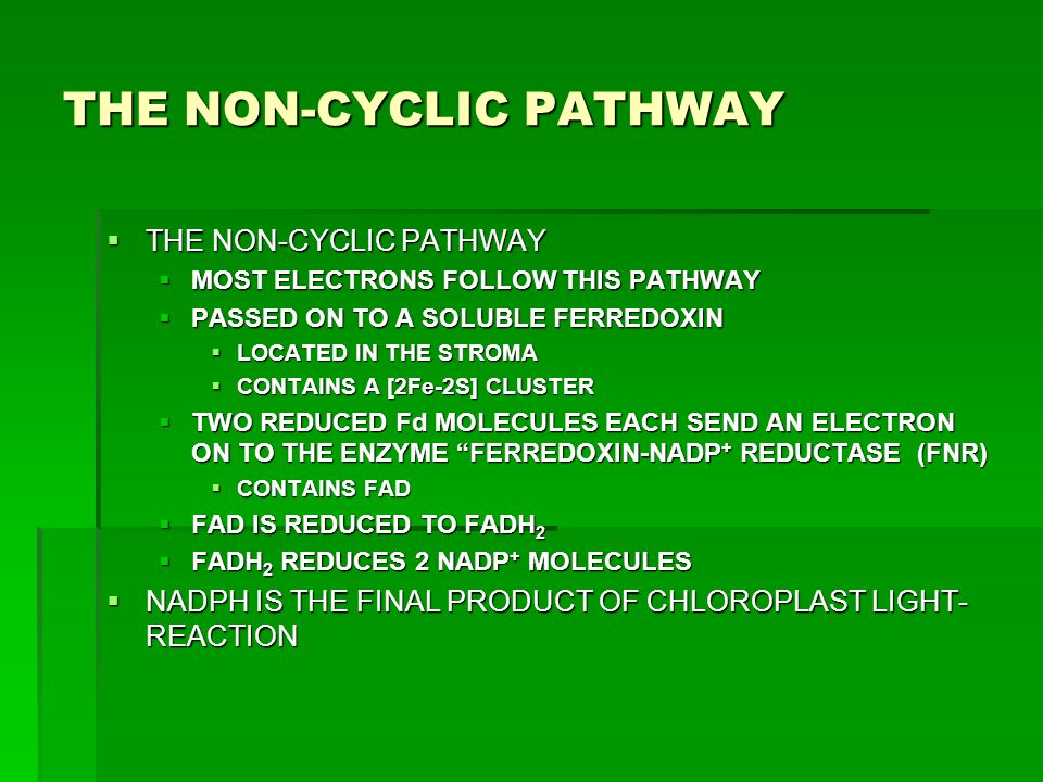 THE NON-CYCLIC PATHWAY  THE NON-CYCLIC PATHWAY  MOST ELECTRONS FOLLOW THIS PATHWAY  PASSED ON TO A SOLUBLE FERREDOXIN  LOCATED IN THE STROMA  CON