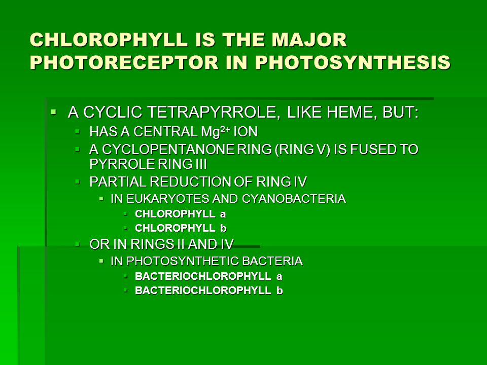 LHC-II  MOST ABUNDANT MEMBRANE PROTEIN IN CHLOROPLASTS OF GREEN PLANTS  A TRANSMEMBRANE PROTEIN  BINDS  ~ 7 CHLOROPHYLL a MOLECULES  ~ 5 CHLOROPHYLL b MOLECULES  TWO CAROTENOIDS  COMPRISES ABOUT 50% OF ALL CHLOROPHYLL IN BIOSPHERE