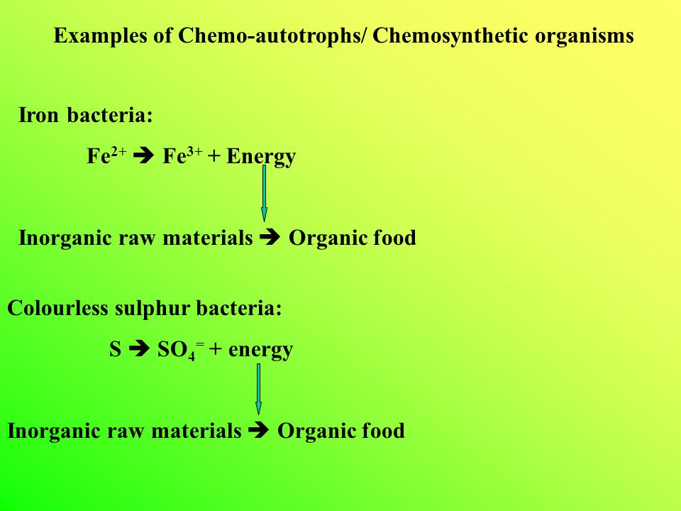 Examples of Chemo-autotrophs/ Chemosynthetic organisms Iron bacteria: Fe 2+  Fe 3+ + Energy Inorganic raw materials  Organic food Colourless sulphur