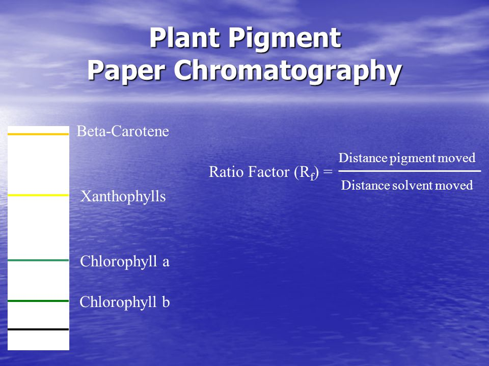 Plant Pigment Paper Chromatography Beta-Carotene Xanthophylls Chlorophyll a Chlorophyll b Ratio Factor (R f ) = Distance pigment moved Distance solvent moved