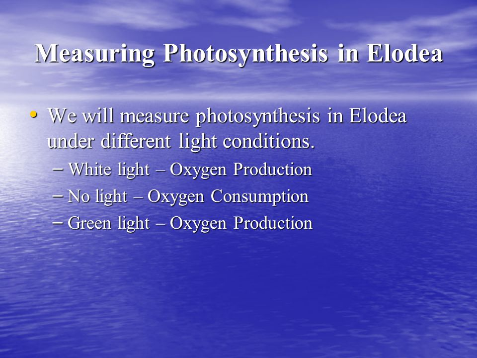 Measuring Photosynthesis in Elodea We will measure photosynthesis in Elodea under different light conditions.