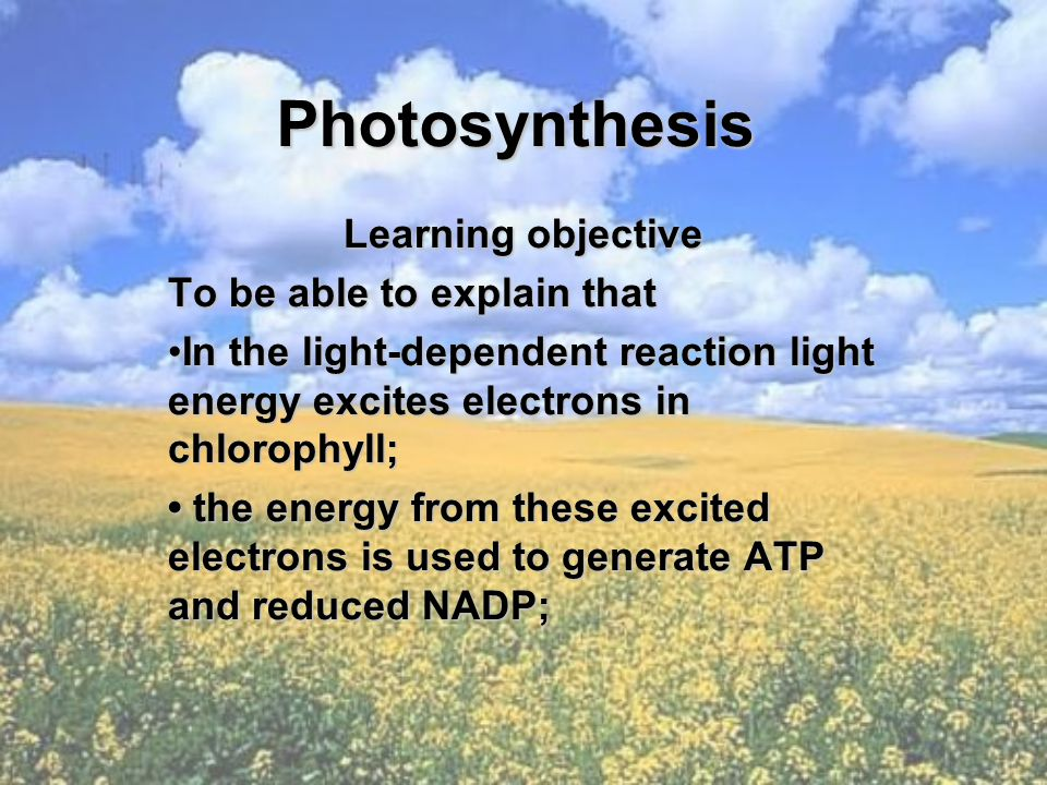 Photosynthesis Learning objective To be able to explain that In the light-dependent reaction light energy excites electrons in chlorophyll;In the light-dependent reaction light energy excites electrons in chlorophyll; the energy from these excited electrons is used to generate ATP and reduced NADP; the energy from these excited electrons is used to generate ATP and reduced NADP;