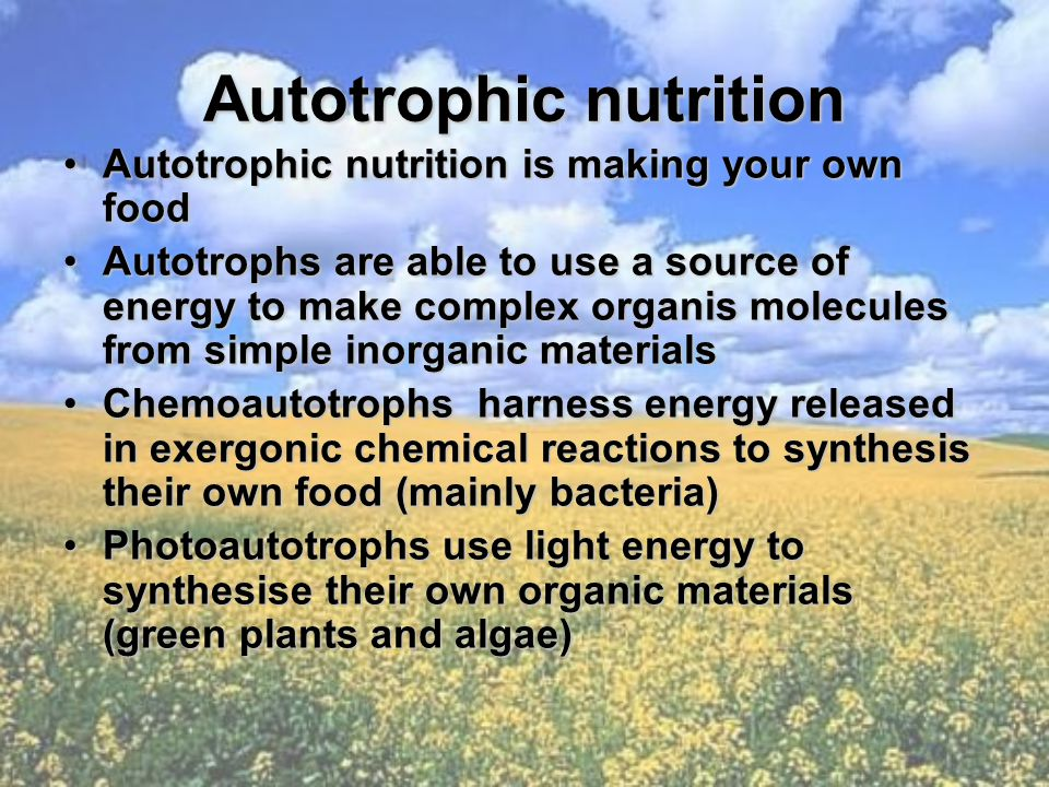 Autotrophic nutrition Autotrophic nutrition is making your own foodAutotrophic nutrition is making your own food Autotrophs are able to use a source of energy to make complex organis molecules from simple inorganic materialsAutotrophs are able to use a source of energy to make complex organis molecules from simple inorganic materials Chemoautotrophs harness energy released in exergonic chemical reactions to synthesis their own food (mainly bacteria)Chemoautotrophs harness energy released in exergonic chemical reactions to synthesis their own food (mainly bacteria) Photoautotrophs use light energy to synthesise their own organic materials (green plants and algae)Photoautotrophs use light energy to synthesise their own organic materials (green plants and algae)