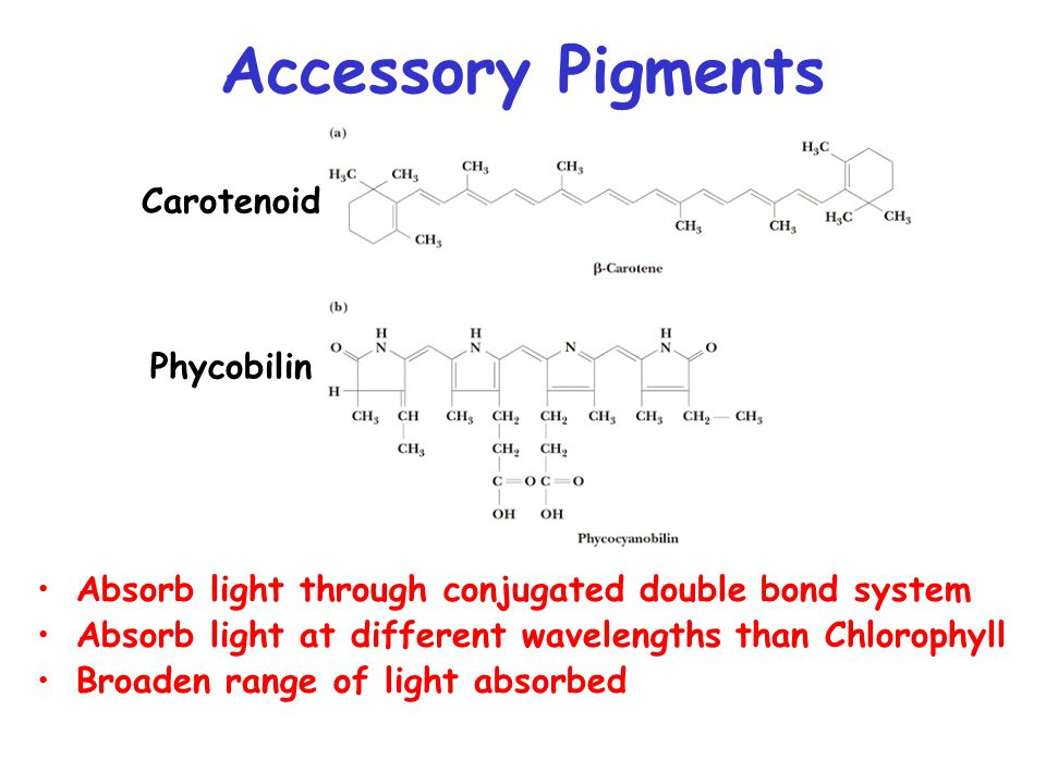 Accessory Pigments Absorb light through conjugated double bond system Absorb light at different wavelengths than Chlorophyll Broaden range of light absorbed Carotenoid Phycobilin