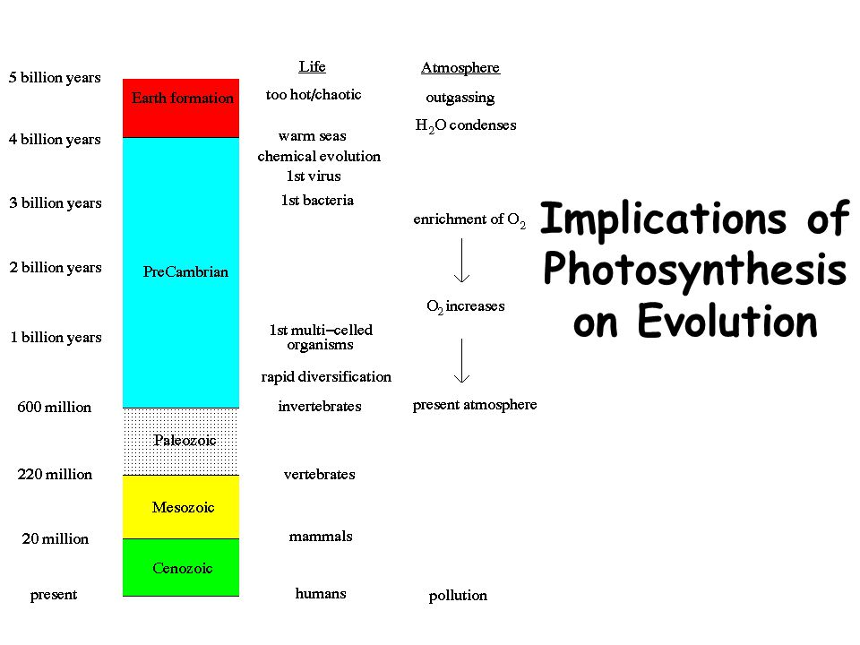 Implications of Photosynthesis on Evolution