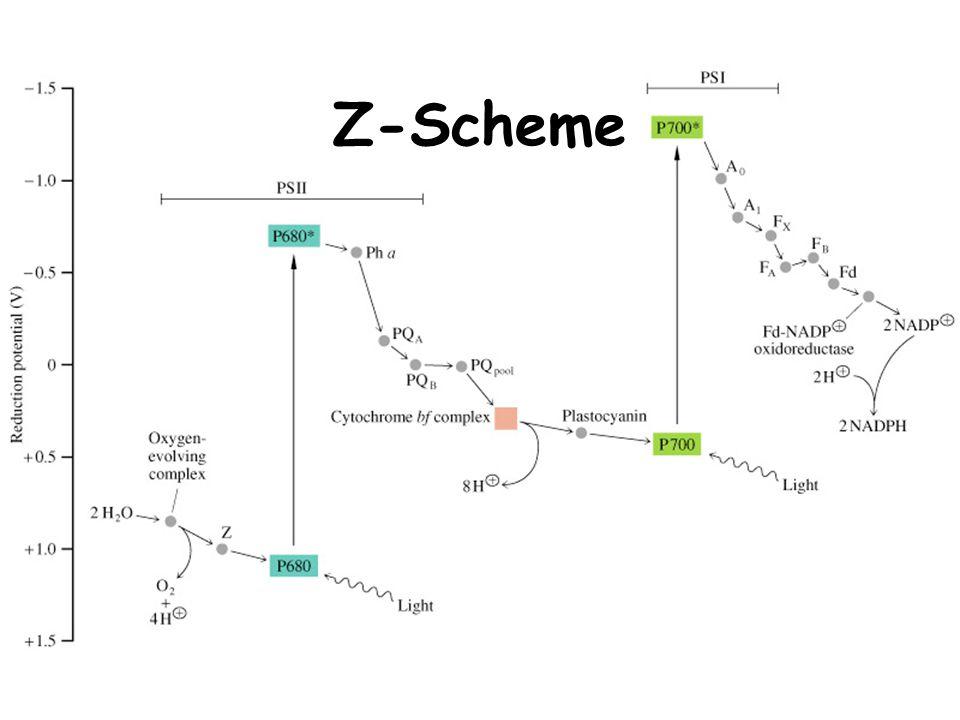 Z-Scheme