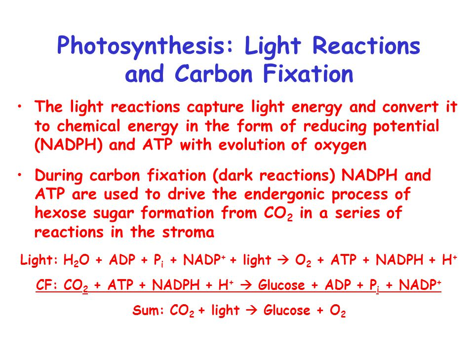 Photosynthetic Electron Transport and Photophosphorylation Analogous to respiratory ETC and oxidative phosphorylation Light driven ETC generates a proton gradient which is used to provide energy for ATP production through a F 1 F o type ATPase.