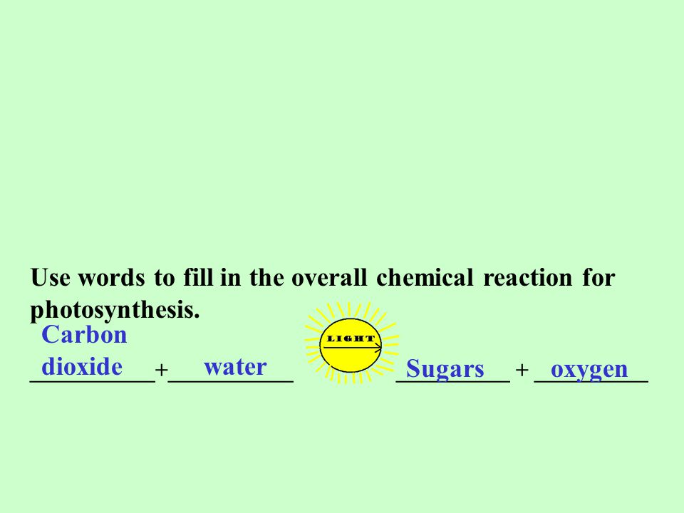 Use words to fill in the overall chemical reaction for photosynthesis. ___________+___________ __________ + __________ Carbon dioxide water Sugars oxy