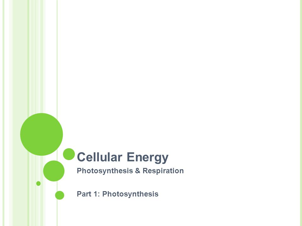 Cellular Energy Photosynthesis & Respiration Part 1: Photosynthesis