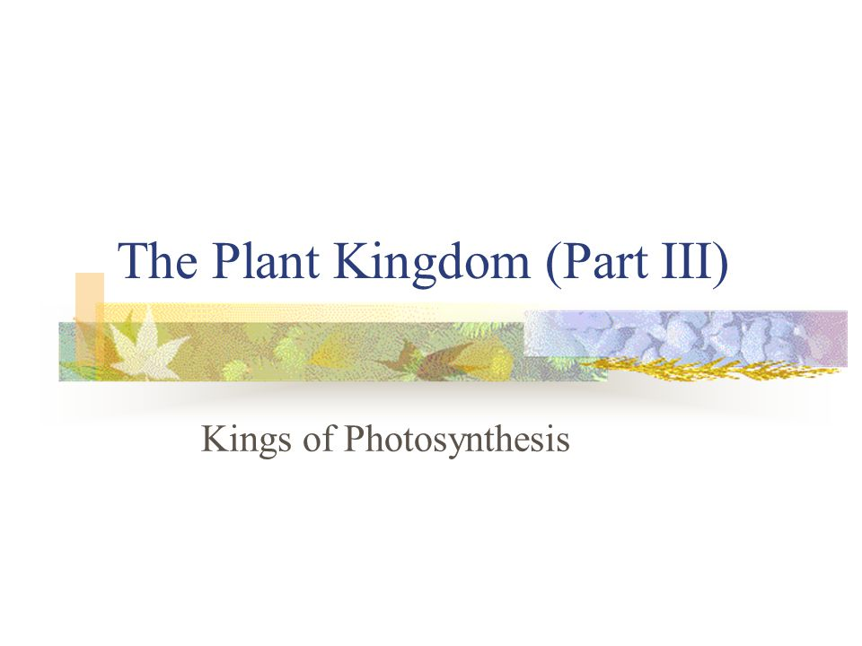 The Plant Kingdom (Part III) Kings of Photosynthesis
