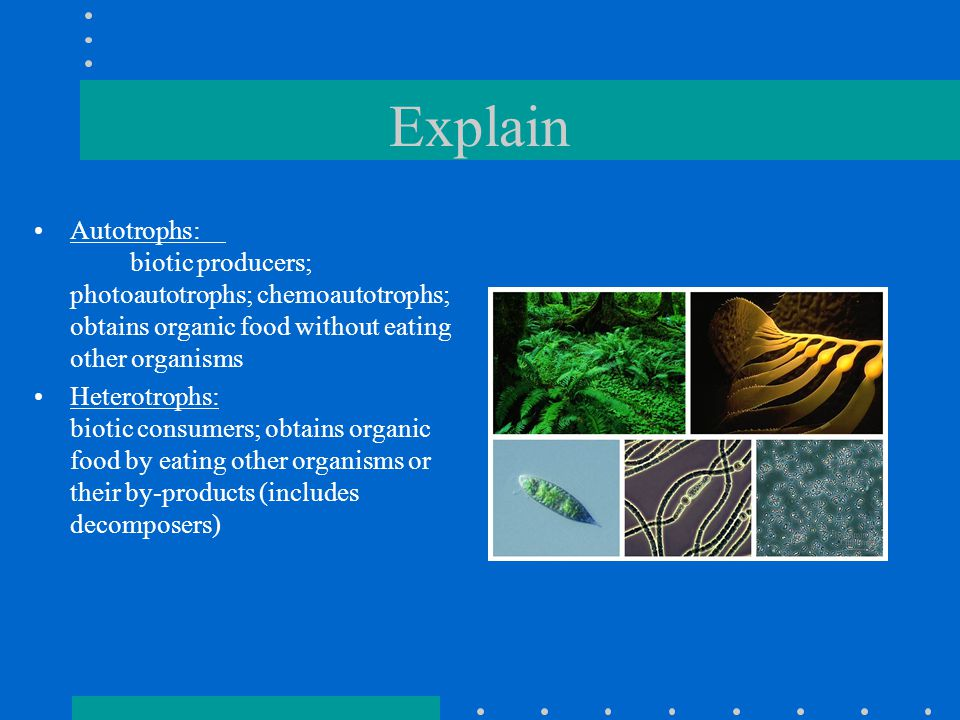 Explore Begin Photosynthesis Lab Photosynthesis Foldable