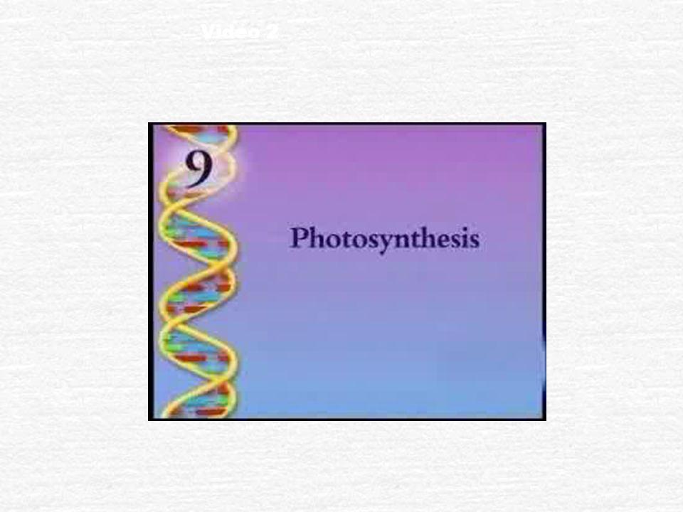 Explain Autotrophs: biotic producers; photoautotrophs; chemoautotrophs; obtains organic food without eating other organisms Heterotrophs: biotic consu