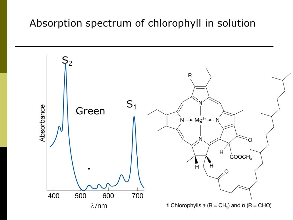 Absorption spectrum of chlorophyll in solution Green S1S1 S2S2