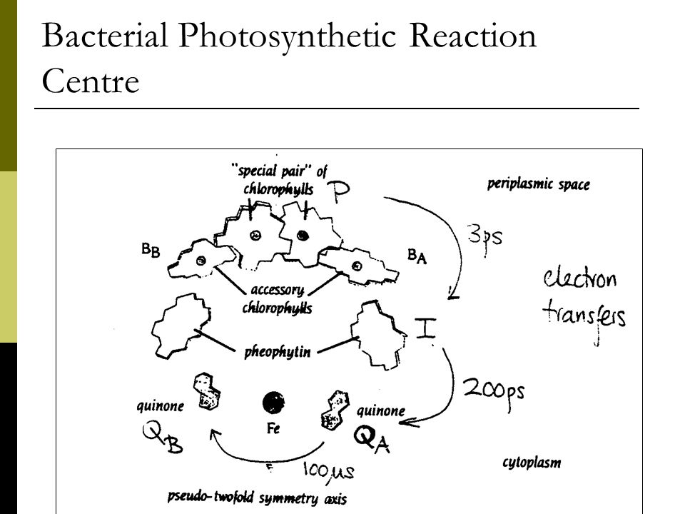 Bacterial Photosynthetic Reaction Centre