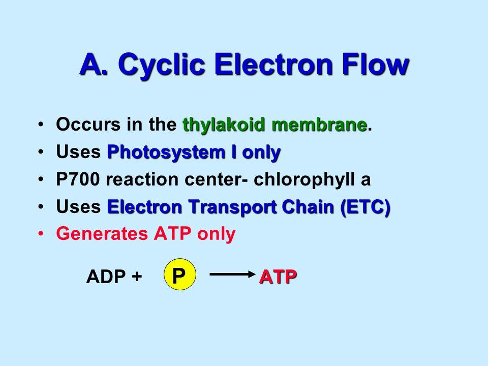A. Cyclic Electron Flow thylakoid membraneOccurs in the thylakoid membrane.