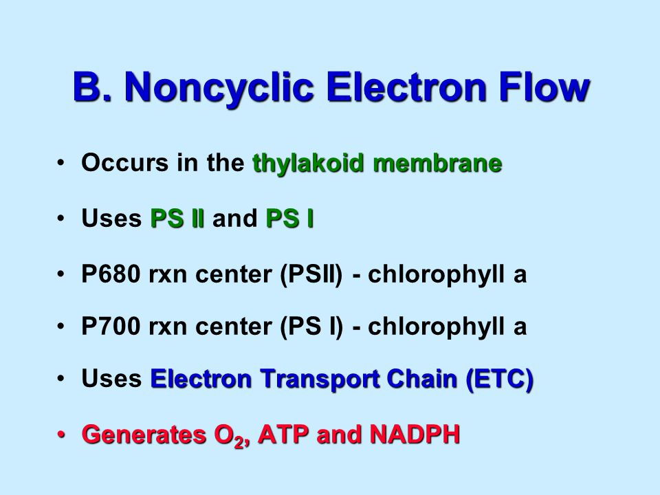 B. Noncyclic Electron Flow thylakoid membraneOccurs in the thylakoid membrane PS IIPS IUses PS II and PS I P680 rxn center (PSII) - chlorophyll a P700