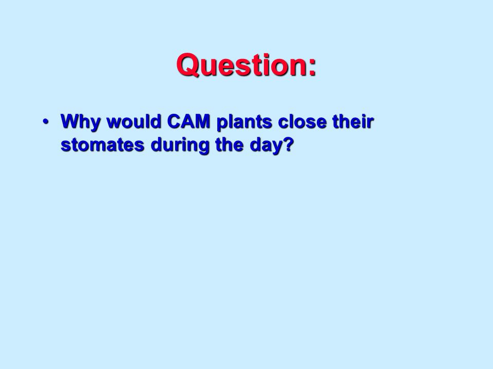 Question: Why would CAM plants close their stomates during the day Why would CAM plants close their stomates during the day