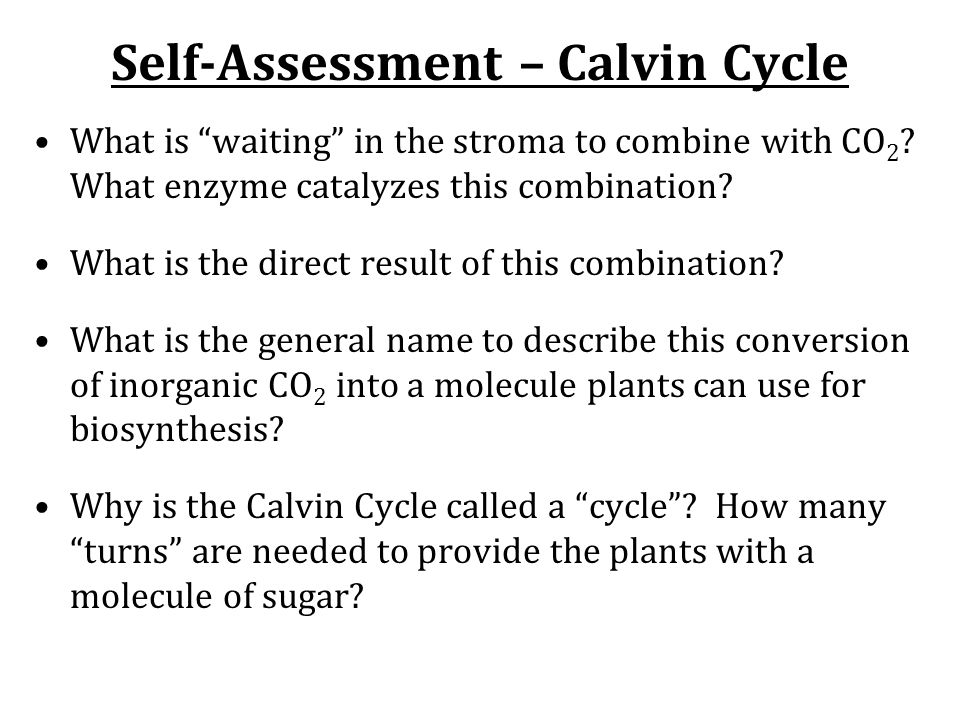 Self-Assessment – Calvin Cycle What is waiting in the stroma to combine with CO 2 .