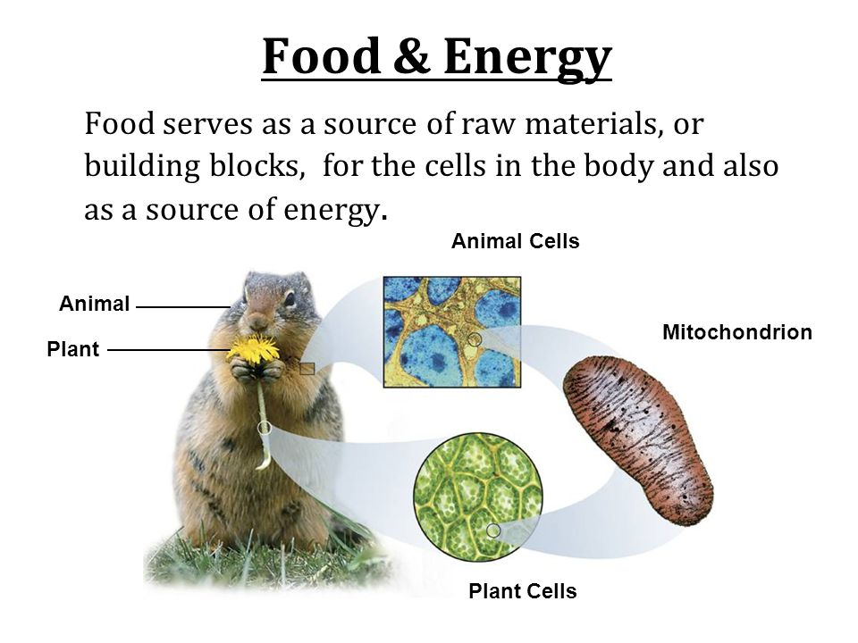 Food & Energy Food serves as a source of raw materials, or building blocks, for the cells in the body and also as a source of energy.