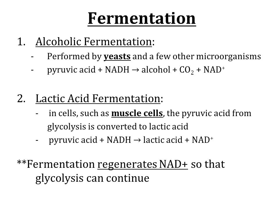 Fermentation 1.Alcoholic Fermentation: -Performed by yeasts and a few other microorganisms -pyruvic acid + NADH → alcohol + CO 2 + NAD + 2.Lactic Acid Fermentation: - in cells, such as muscle cells, the pyruvic acid from glycolysis is converted to lactic acid - pyruvic acid + NADH → lactic acid + NAD + **Fermentation regenerates NAD+ so that glycolysis can continue