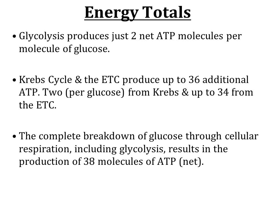 Energy Totals Glycolysis produces just 2 net ATP molecules per molecule of glucose.