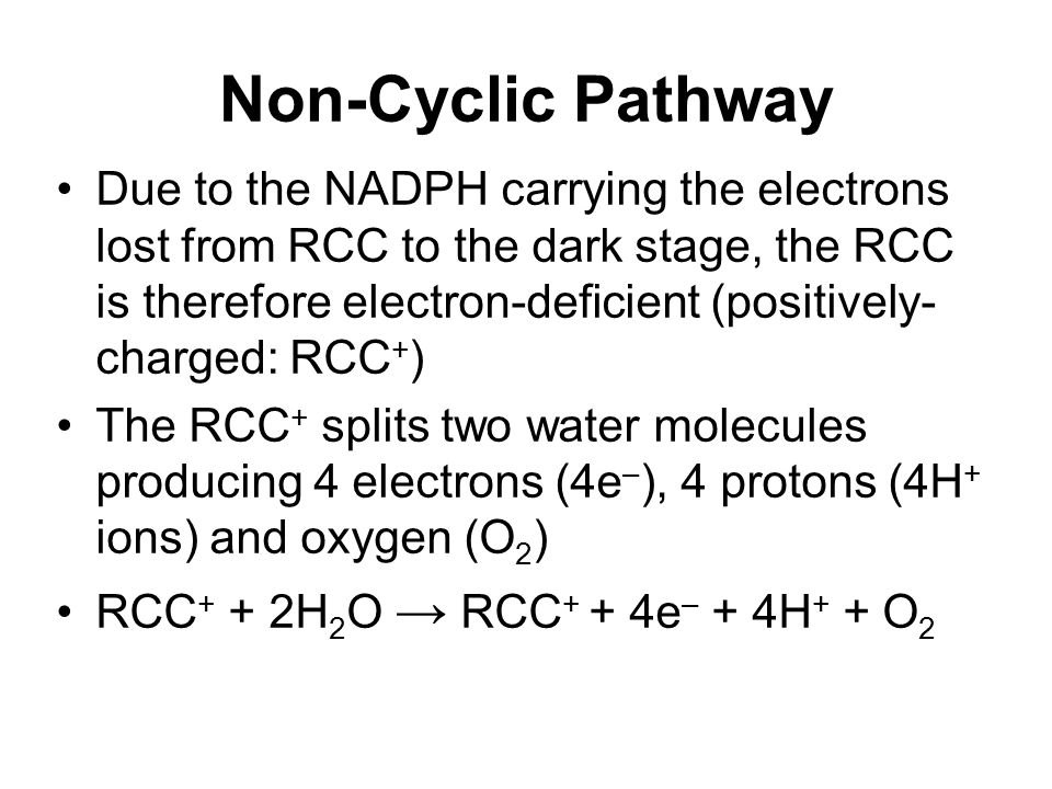 Non-Cyclic Pathway Due to the NADPH carrying the electrons lost from RCC to the dark stage, the RCC is therefore electron-deficient (positively- charged: RCC + ) The RCC + splits two water molecules producing 4 electrons (4e – ), 4 protons (4H + ions) and oxygen (O 2 ) RCC + + 2H 2 O → RCC + + 4e – + 4H + + O 2