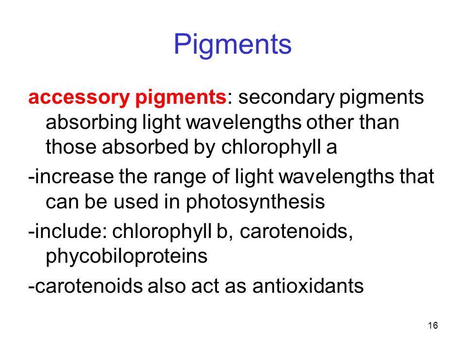 16 Pigments accessory pigments: secondary pigments absorbing light wavelengths other than those absorbed by chlorophyll a -increase the range of light wavelengths that can be used in photosynthesis -include: chlorophyll b, carotenoids, phycobiloproteins -carotenoids also act as antioxidants