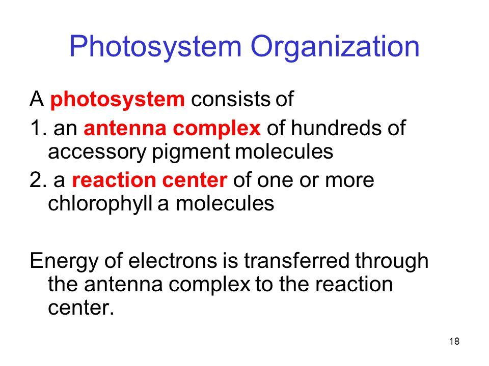 18 Photosystem Organization A photosystem consists of 1.