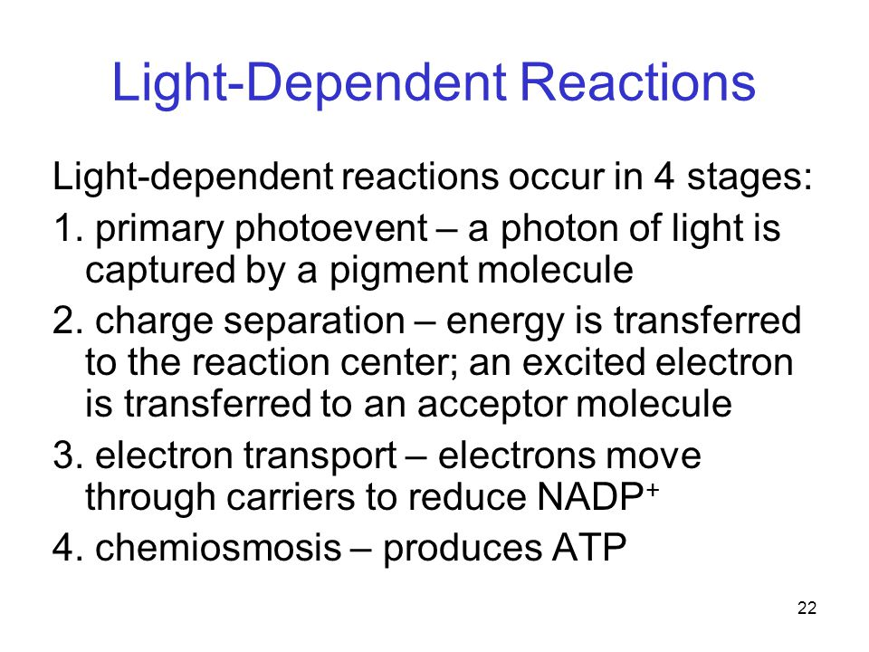 22 Light-Dependent Reactions Light-dependent reactions occur in 4 stages: 1.