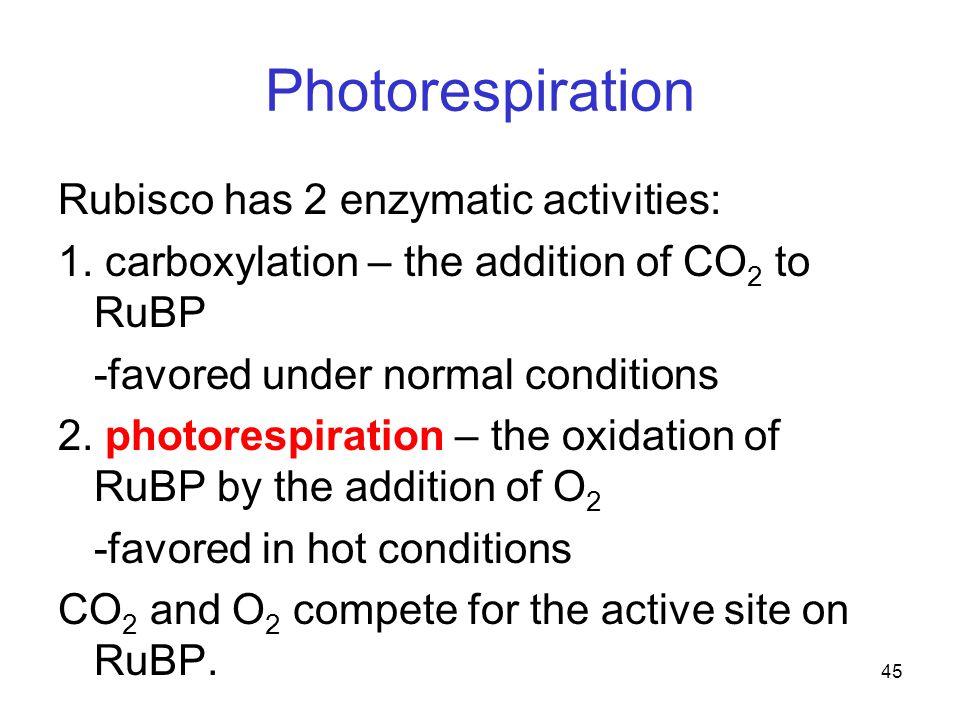 45 Photorespiration Rubisco has 2 enzymatic activities: 1.