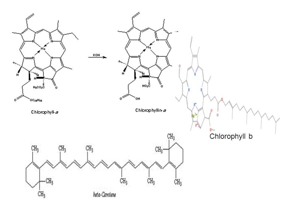 Chlorophyll b