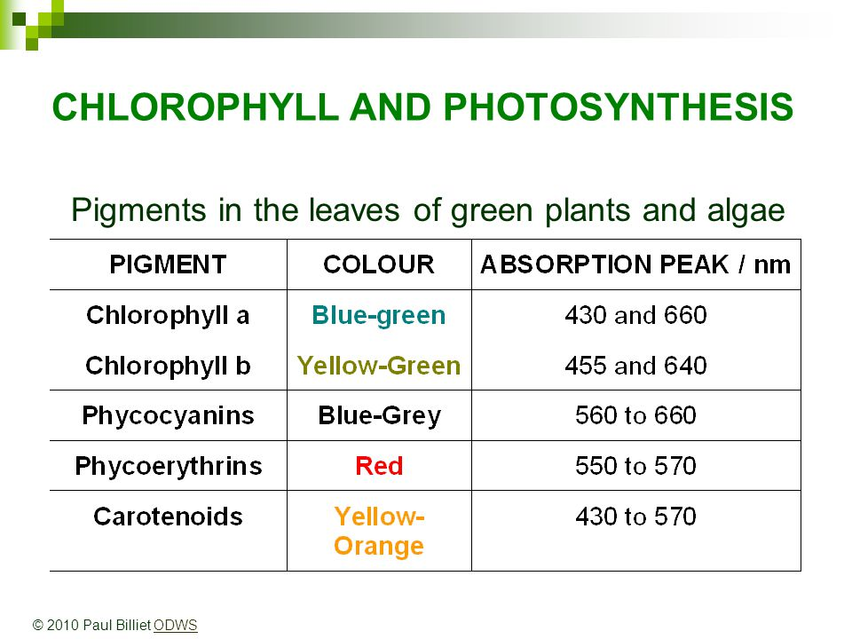 CHLOROPHYLL AND PHOTOSYNTHESIS Pigments in the leaves of green plants and algae © 2010 Paul Billiet ODWSODWS