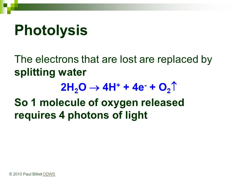 Photolysis The electrons that are lost are replaced by splitting water 2H 2 O  4H + + 4e - + O 2  So 1 molecule of oxygen released requires 4 photons of light © 2010 Paul Billiet ODWSODWS