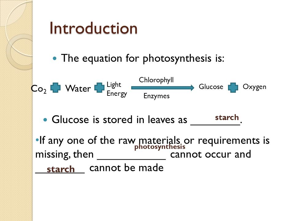 Introduction The equation for photosynthesis is: Glucose is stored in leaves as ________. Co 2 Water Light Energy GlucoseOxygen Chlorophyll Enzymes st