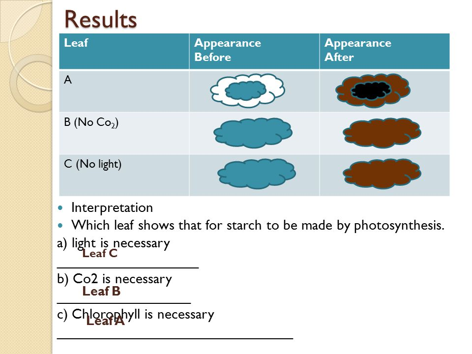 Results LeafAppearance Before Appearance After A B (No Co 2 ) C (No light) Interpretation Which leaf shows that for starch to be made by photosynthesis.