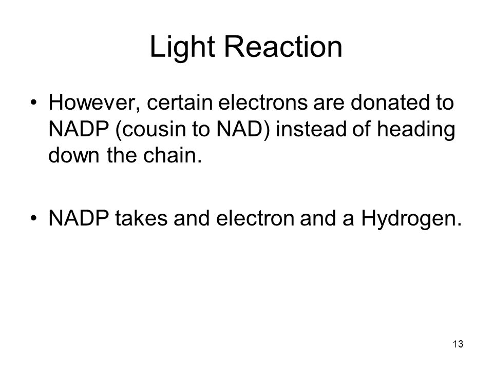 Light Reaction However, certain electrons are donated to NADP (cousin to NAD) instead of heading down the chain.