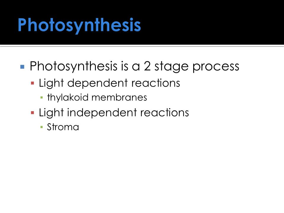 Photosynthesis  Photosynthesis is a 2 stage process  Light dependent reactions ▪ thylakoid membranes  Light independent reactions ▪ Stroma