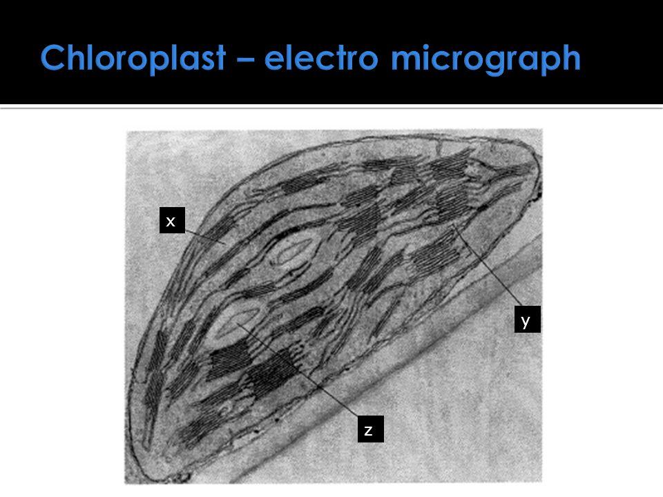 Chloroplast – electro micrograph x y z