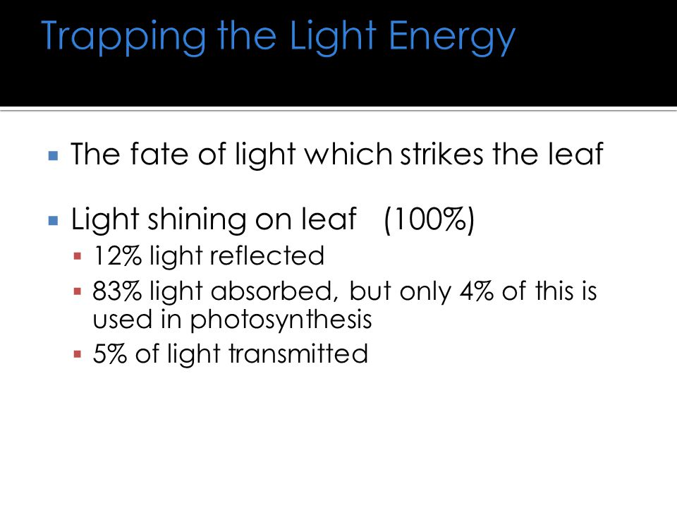 Trapping the Light Energy  The fate of light which strikes the leaf  Light shining on leaf (100%)  12% light reflected  83% light absorbed, but only 4% of this is used in photosynthesis  5% of light transmitted