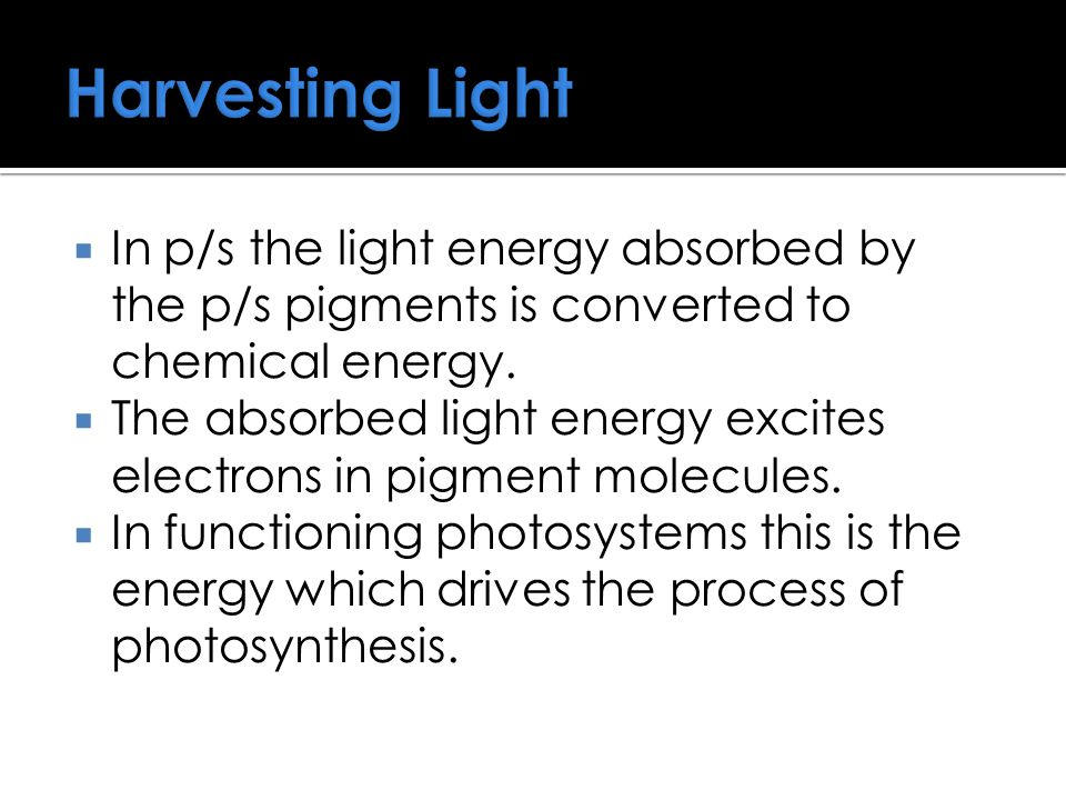 Harvesting Light  In p/s the light energy absorbed by the p/s pigments is converted to chemical energy.  The absorbed light energy excites electrons