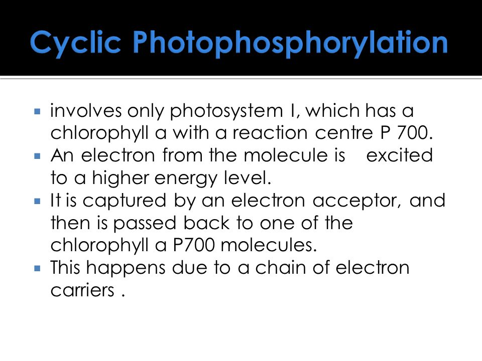 Cyclic Photophosphorylation  involves only photosystem I, which has a chlorophyll a with a reaction centre P 700.