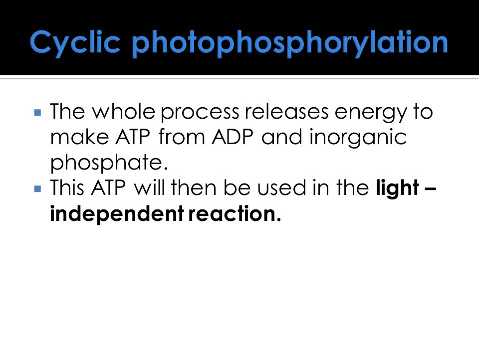 Cyclic photophosphorylation  The whole process releases energy to make ATP from ADP and inorganic phosphate.  This ATP will then be used in the ligh