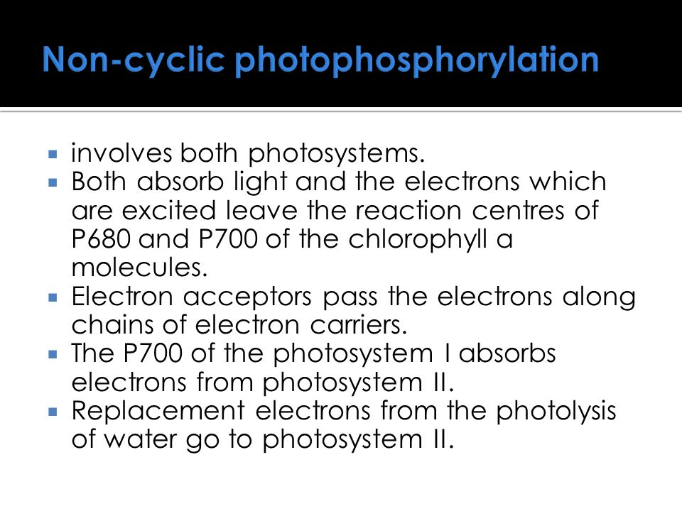 Non-cyclic photophosphorylation  involves both photosystems.  Both absorb light and the electrons which are excited leave the reaction centres of P6