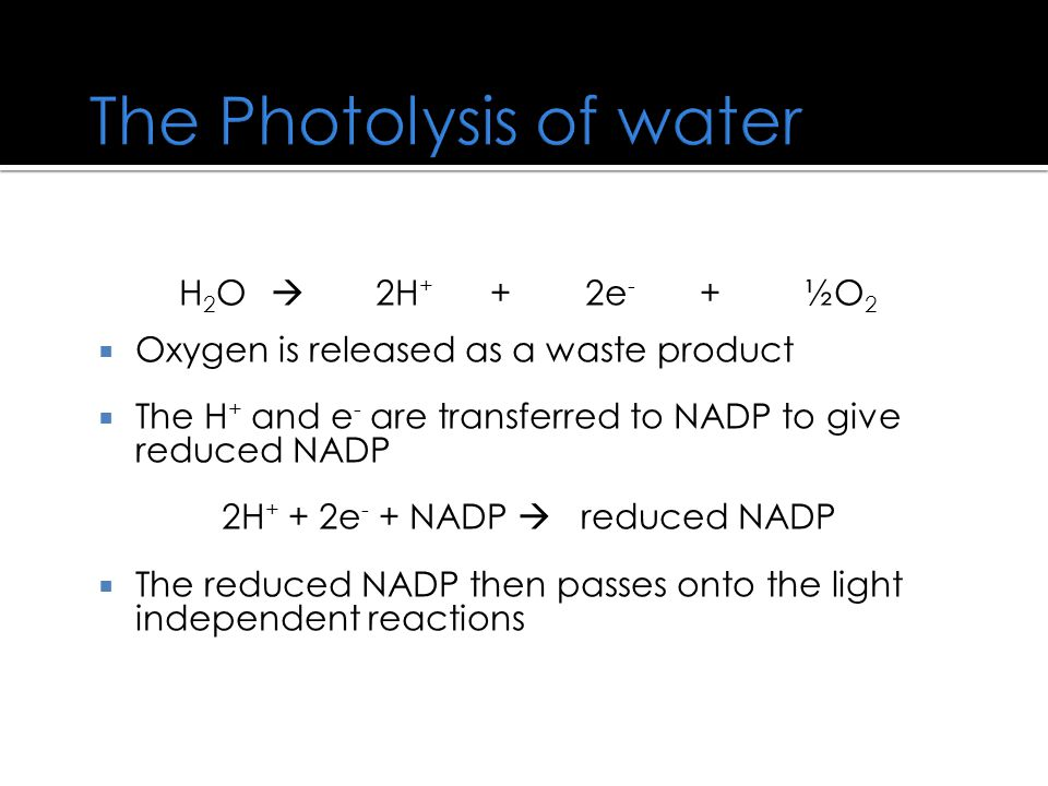 The Photolysis of water H 2 O  2H + + 2e - + ½O 2  Oxygen is released as a waste product  The H + and e - are transferred to NADP to give reduced NADP 2H + + 2e - + NADP  reduced NADP  The reduced NADP then passes onto the light independent reactions