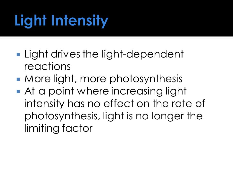  Light drives the light-dependent reactions  More light, more photosynthesis  At a point where increasing light intensity has no effect on the rate of photosynthesis, light is no longer the limiting factor