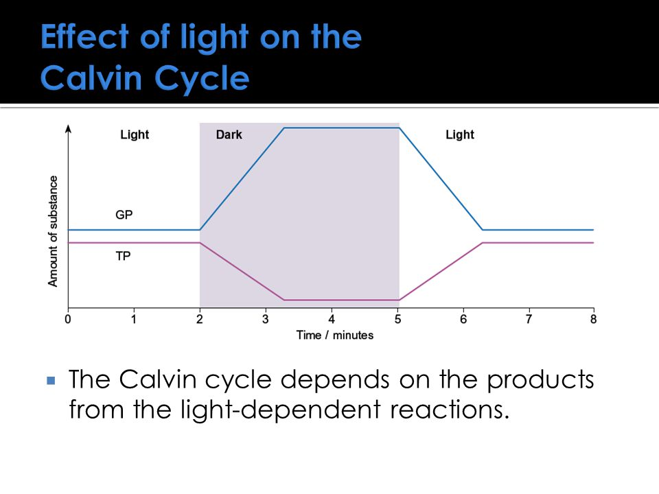 Effect of light on the Calvin Cycle  The Calvin cycle depends on the products from the light-dependent reactions.
